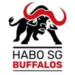 habo_buffalos